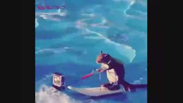 سنجاب جت  اسکی سوار+فیلم ویدیو کلیپ جالب بامزه حیوانات