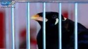نمایشگاه حیوانات خانگی در ایران!