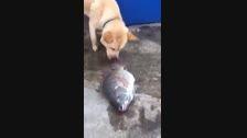 تلاش سگ برای نجات ماهی (خدااااااا)