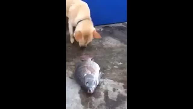 کلیپ جالب تلاش سگ برای نجات یک ماهی