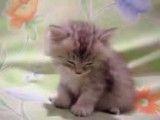 گربه خواب آلو