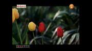 عید شما مبارک با صدای ناصر چشم آذر