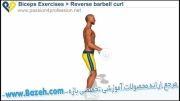 حرکات بدن سازی دو سر بازو - Reverse Barbell Curls