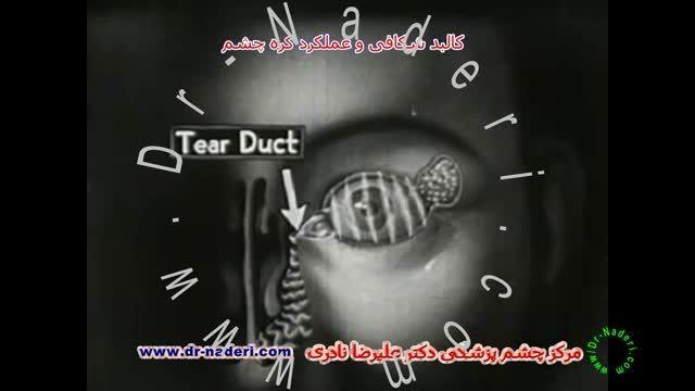 آناتومی و عملکرد چشم-مرکزچشم پزشکی دکتر علیرضا نادری