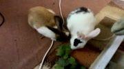 خرگوشای ناز با آهنگ شاد