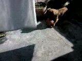 سالی.سگ بازیگوش من