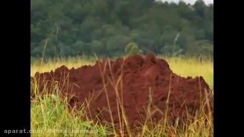 یک ویدیو جالب و دیدنی از خانه مورچه ها ...