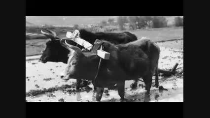 جشن مهر و امیر امیرکلا ١٦ مهر ١٣٩٤