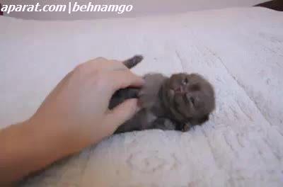گربه به این نازی دیدی :))