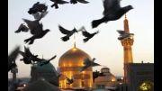 !! ولادت امام رضا مبارک باد !! با صدای محسن چاوشی *****