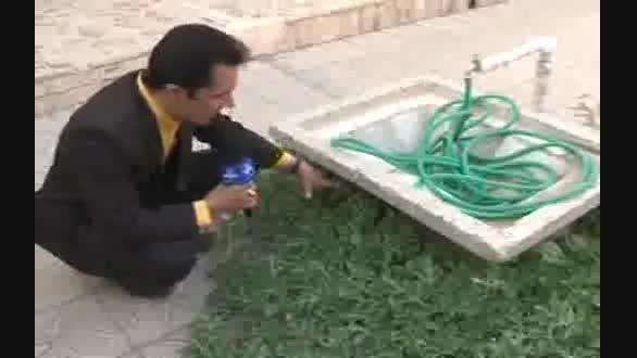 رشد هندوانه درکنار حوض یک حیات منزل در یزد به طور خودرو