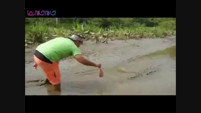 رودررو شدن با تمساح برای یک لقمه نان+فیلم ویدیو کلیپ