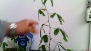 قهر کردن گل قهرکن ... :))