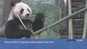 لحظه فرار پاندا به دلیل زمین لرزه در چین!!