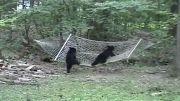 تفریح خرس ها (خنده دار)