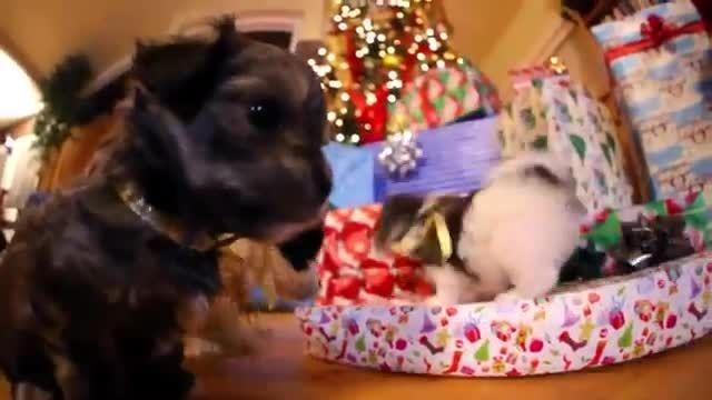 جسن کریسمس یه توله سگ منظورم یه Puppy بود! خخخخ