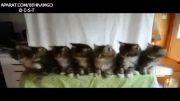 ازمایش جالب روی گربه ها!!