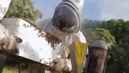 کندوی عسل