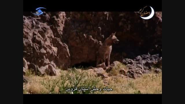 حیات وحش - استان قزوین