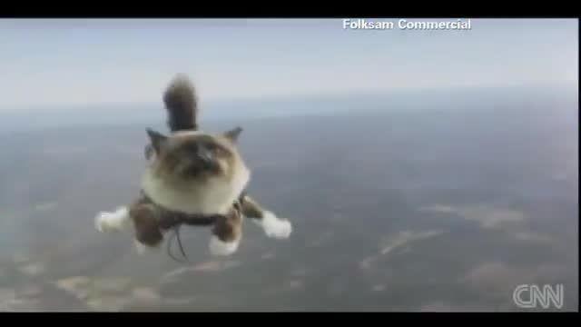گربه ای که سقوط آزاد میکند!!