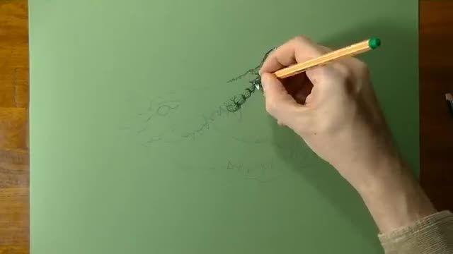 نقاشی 3 بعدی شگفت انگیز از کروکدیل