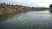پرش سنگ روی آب