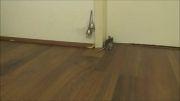 موش خانگی هوشمند که برای ورود به منزل زنگ میزند!5