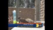 غذا دادن یک پرنده به پرنده گرفتار در قفس!!