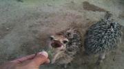 مزرعه پرورش شترمرغ داش ماکو 3