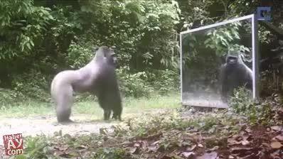 واکنش جالب حیوانات به آینه!