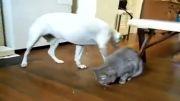 حیوانات دشمن در کنار هم