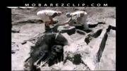 اسکلت انسان های غول پیکر (قوم عاد)