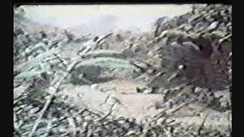 محمد نبودی ببینی شهر آزاد گشته