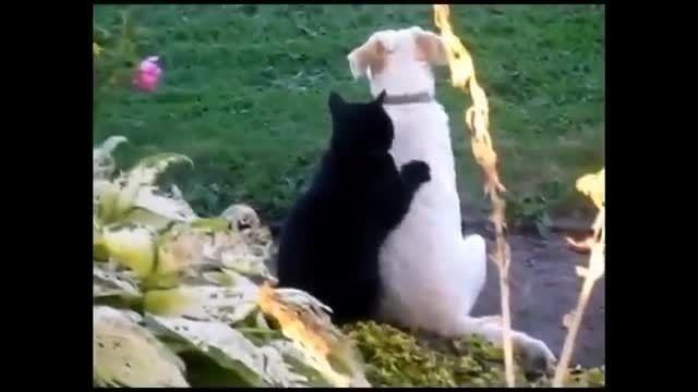 گربه های دوست داشتنی