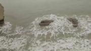 پری دریایی