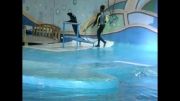 پرش شیر دریایی (دلفیناریوم برج میلاد)