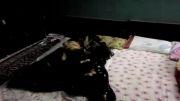 ترساندن یک آدم خواب