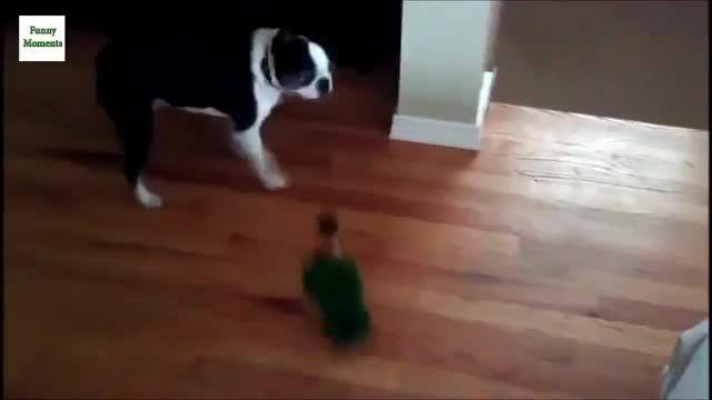 تقابل و بازی طوطی سانان با سایر حیوانات