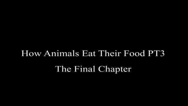 حیوانات چگونه غذا مى خورند؟؟پارت ٣