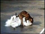 ادرار گربه روی سگ خیلی جالب و خنده دار