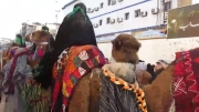 موکب بزرگ اسیران شام در پیاده روی اربعین