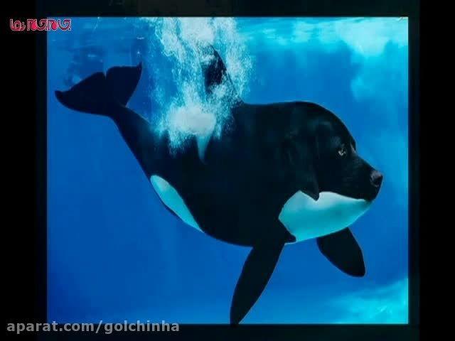تصاویر فتوشاپ شده از حیوانات فیلم کلیپ گلچین صفاسا