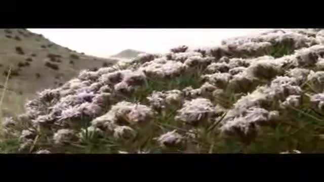 حیات وحش پارک ملی تندوره