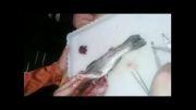 تشریح ماهی در کلاس های تابستان - فیلم 3