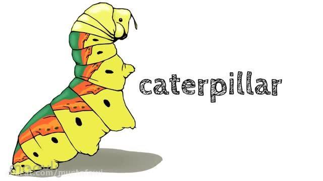 آموزش کلمات جدید زبان انگلیسی به کودکان (حشرات) 2