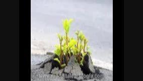 کنکور95-فول انگیزشی کنکور95-دکتر افشار