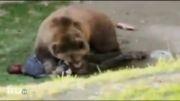 حمله خرس به انسان زنده 12+