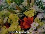 ترانه ماه دل آرا با صدای مجید اخشابی