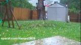 کنده شدن درخت،طوفان سندی