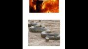 عکس های جهنم با توضیح